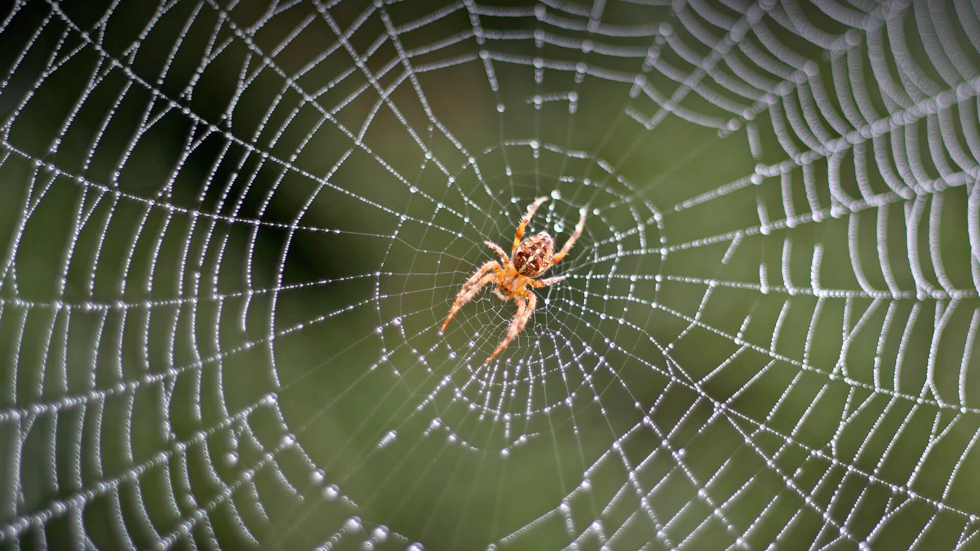 如何消灭家里的蜘蛛?